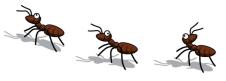 ant parade
